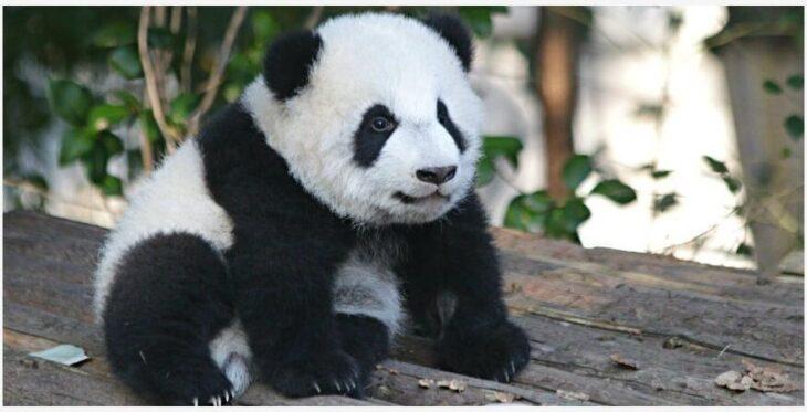 6 best animal destinations in Asia