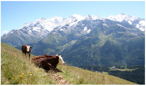 Cheeses from Les Contamines