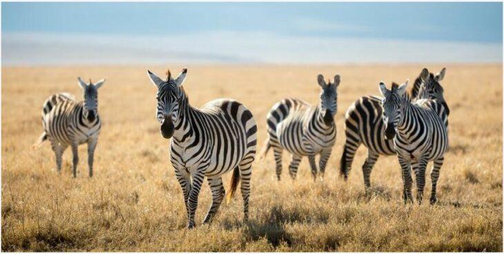 Tanzania - unique nature and fauna